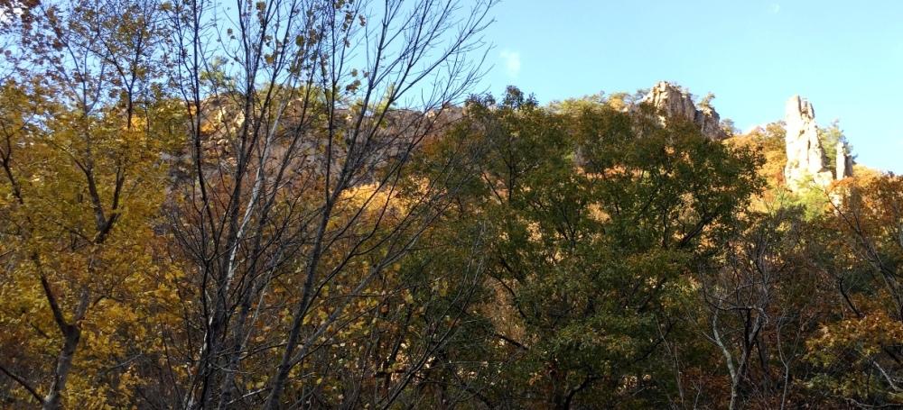 Vách đá trên đỉnh núi sau hàng cây.