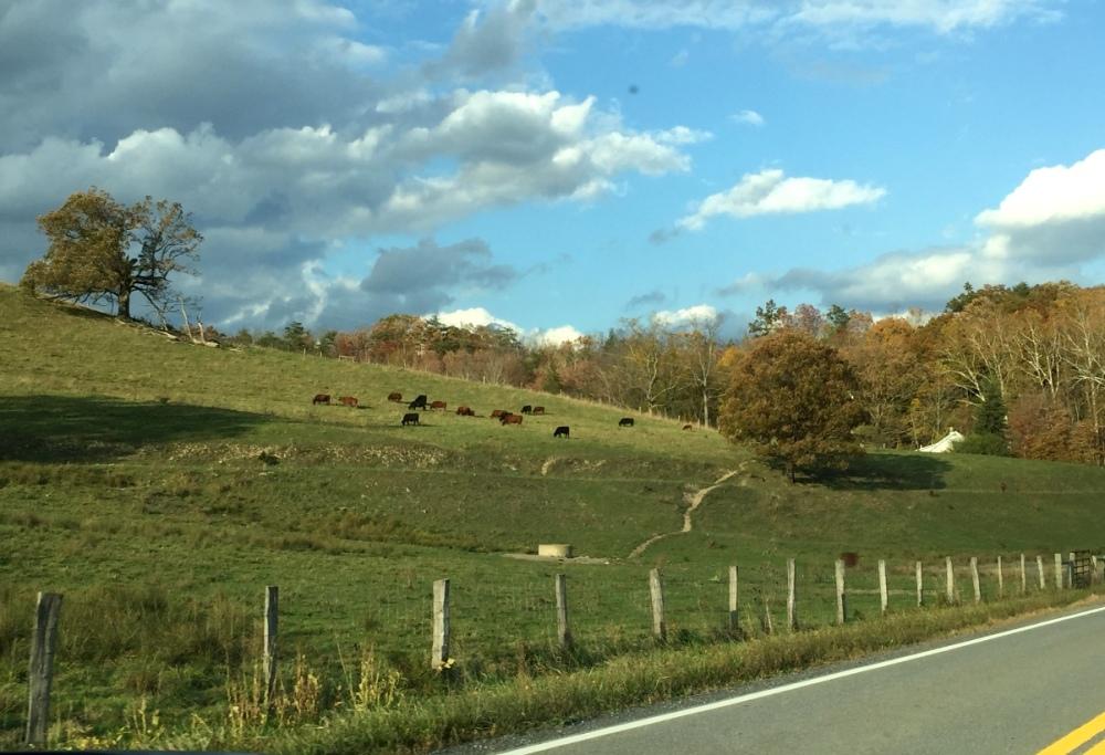 Ô.. mấy chú bò này hang out gần bên đường.