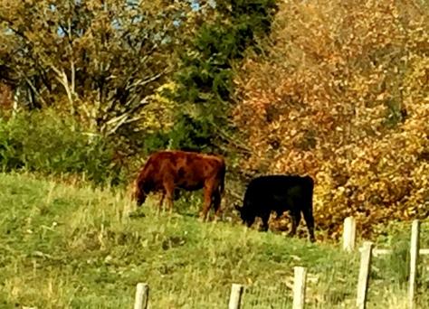 Hai chú này thì sát cạnh hàng rào.