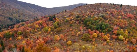 Nhìn bên phải. Ngọn núi với các bụi cây thấp rời rạc.