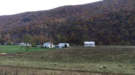 Tiếp tục lên đường. Một xóm nhà bên chân núi và đàn trừu đang ăn đông quá đếm không xuể.