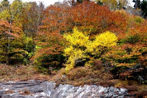 Bụi cây màu vàng tươi trên thành đá đối diện.