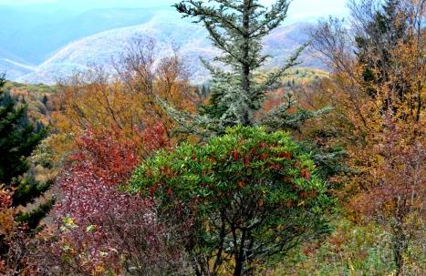 Chổ này bị các bụi cây che mất một phần dãy núi đầy nắng phía sau.
