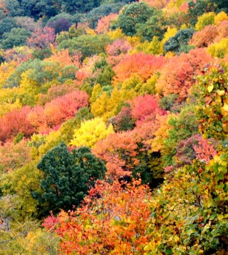 Nhìn gần hơn các bạn sẽ thấy màu sắc rực rở của lỏm cây này.