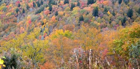 Không thể tưởng tượng được màu sắc của cây lá vùng này.