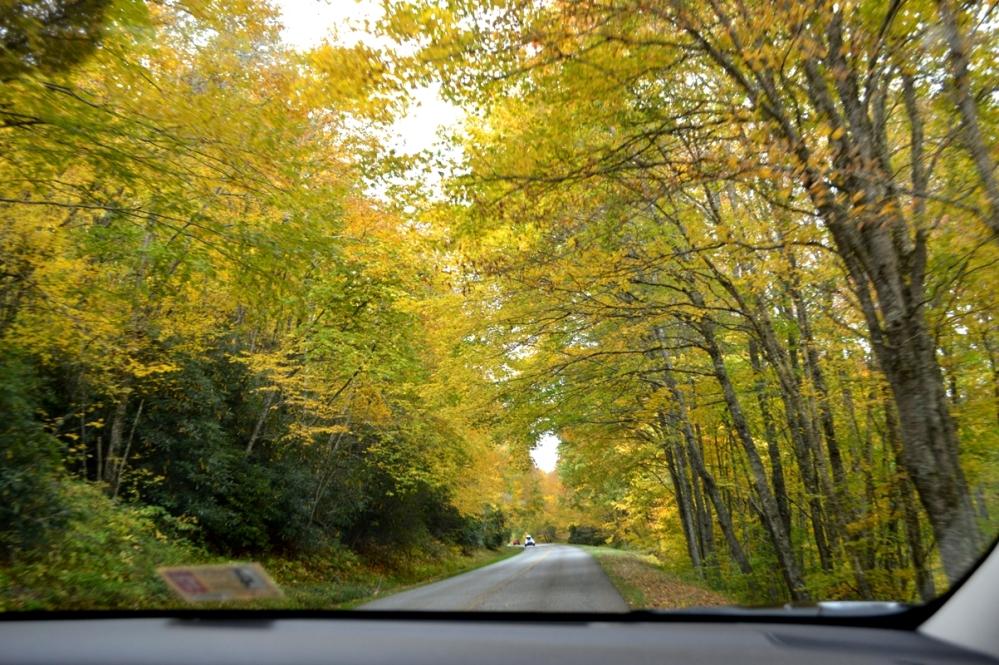 Đường đến Công Viên Quốc Gia Great Smoky Mountains.