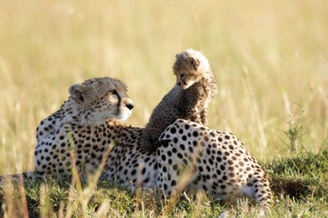 african-cats-7