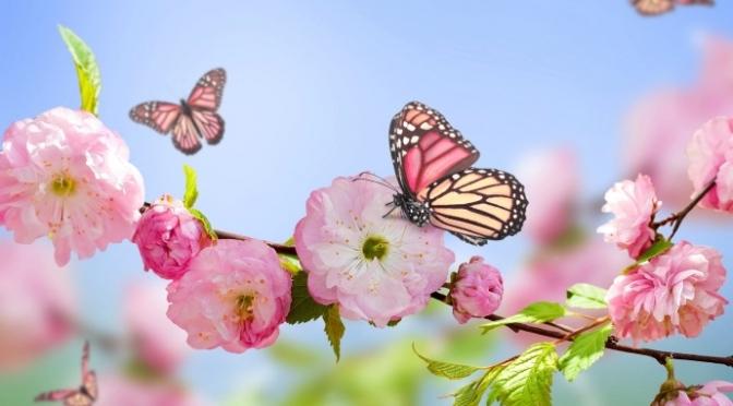 Bài hát bươm bướm – The Butterfly Song