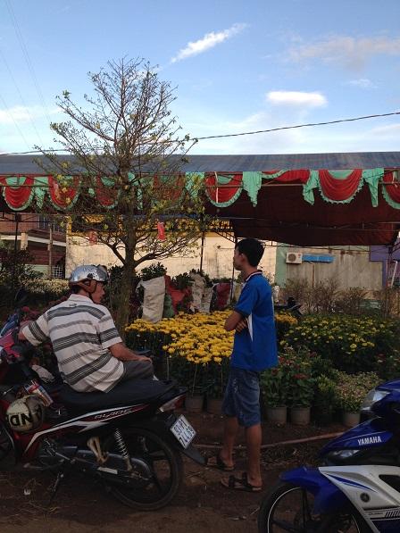 12_Khu vực bán hoa mai, hoa cúc và hoa đào (2) _ Bù Đăng
