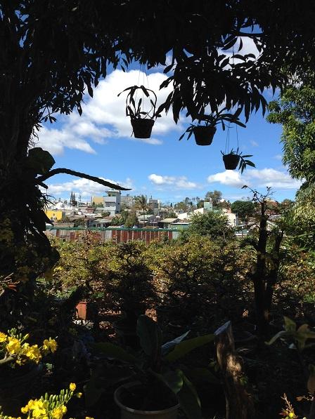 1_Nhà và vườn mai của ông Hải (1)