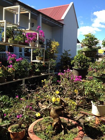 2_Nhà và vườn mai của ông Hải (2)