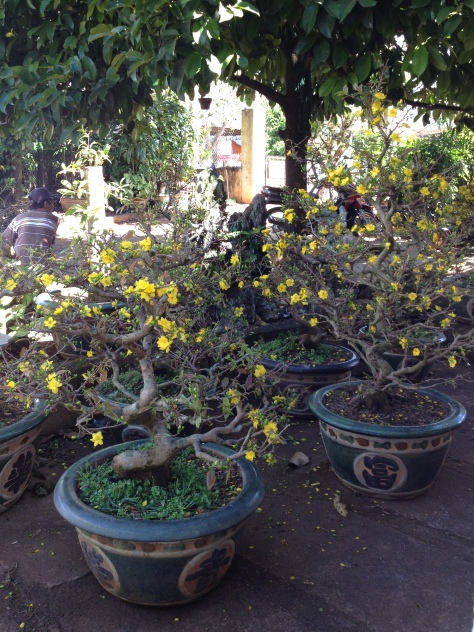5_Nhà và vườn mai của ông Hải (5)