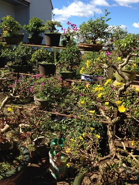 6_Nhà và vườn mai của ông Hải