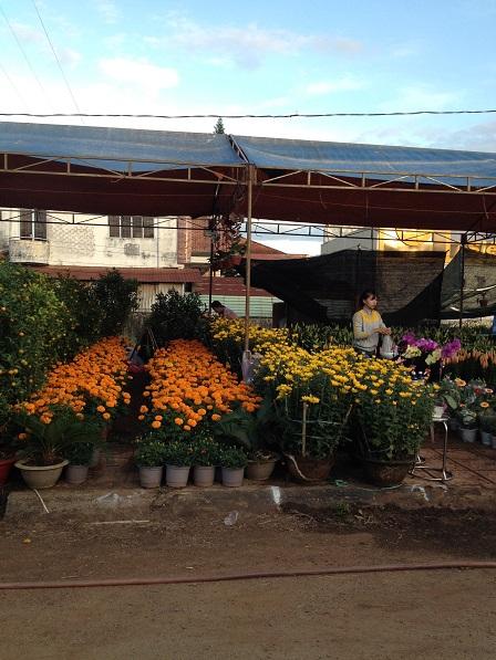 8_Khu vực bán hoa vạn thọ và hoa cúc vàng _ Bù Đăng