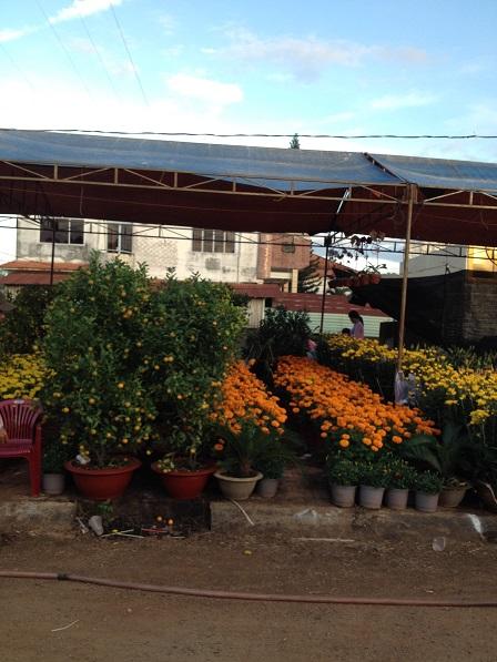 9_Khu vực bán cây quất, hoa vạn thọ và hoa cúc nhỏ _ Bù Đăng