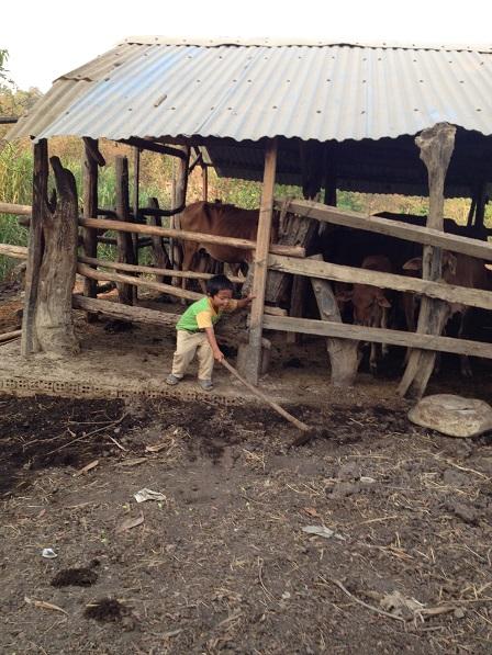 Anh em Thay con bố mẹ Thiếu chơi sau chuồng bò