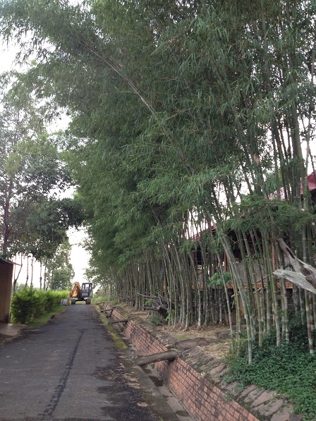 Con đường bên hông của nhà khách Đan Viện Thiên Hòa Gp. Bmt