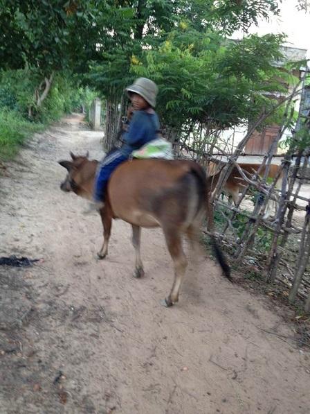 1/ Em Kali buổi chiều đi chăn bò về, phía sau em Kali bao giờ cũng có một cái liềm và một cái bao, để trong khi bò được thả ăn em Kali tranh thủ cắt thêm cỏ đem đến cho bò ăn mau no.