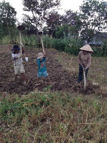 Ba mẹ con của mẹ Sót cuốc đất chuẩn bị trồng bắp vụ mùa hai _ Buôn Hằng