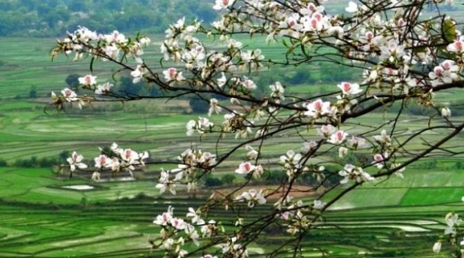Mai An Nguyễn Anh Tuấn:  Tưởng nhớ Trần Vân Hạc