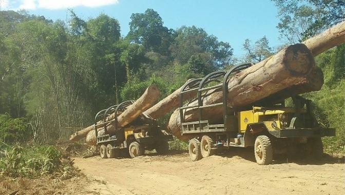 Quan chức tham nhũng Việt Nam kiếm tiền từ gỗ buôn lậu ởCampuchia
