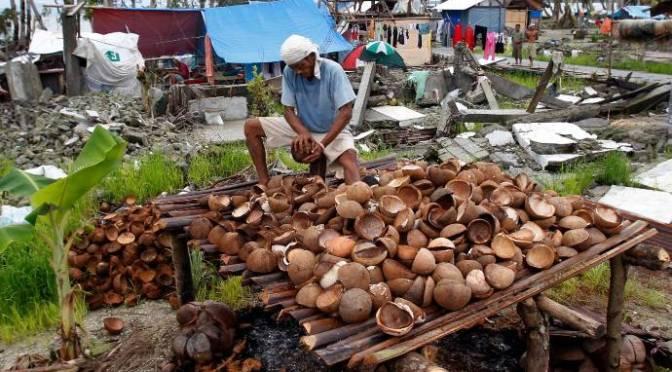 Làm sao để hưởng trái ngọt từ bùng nổ trồng dừa? Nông dân Philipin dùng điệnthoại