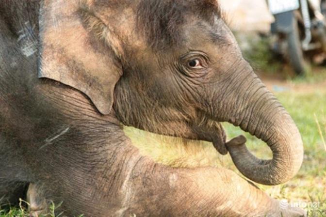 Con voi ăn như nước chảy