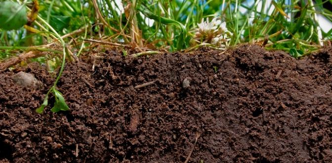 Đất trồng khoẻ mạnh là yếu tố then chốt để nuôi sống thếgiới