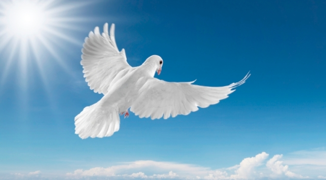 Phúc cho người xây dựng hòa bình, vì họ sẽ được gọi là con của Thượng đế