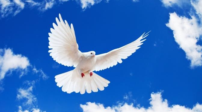 Sứ điệp của Đức Giáo Hoàng – Thông điệp Ngày Thế giới Hòa bình 2018
