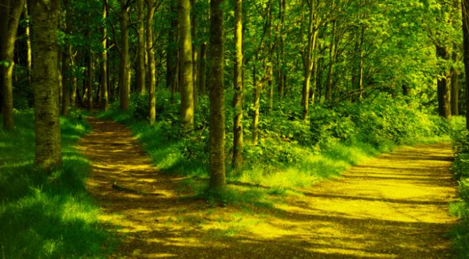 Chia sẻ con đường tâm linh