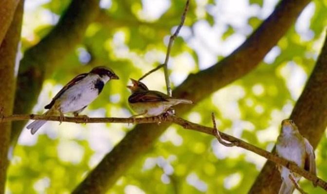 Chim sẻ và hai em nhỏ