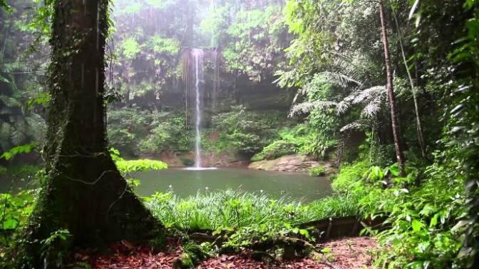 Tiếng mưa và tiếng muôn thú trong rừng