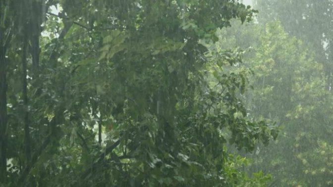 Ông Trời làm mưa héo giấy