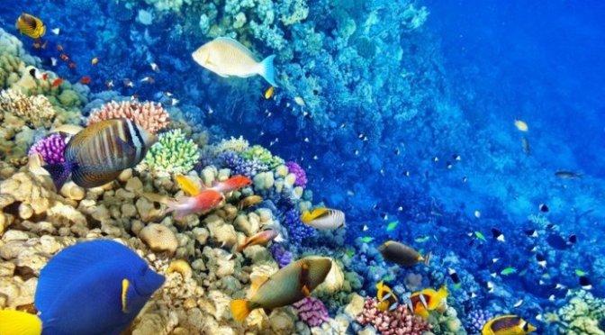 Tình yêu với biển