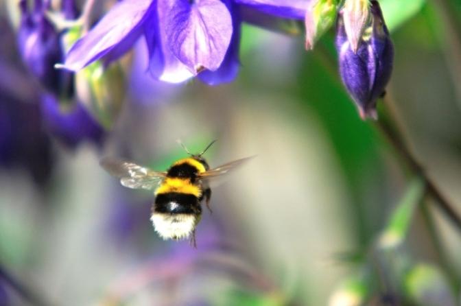 Chuyến bay của ong nghệ