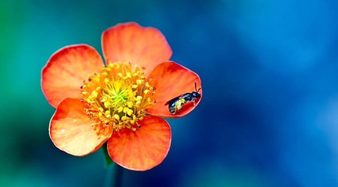 Thiền quán một bông hoa
