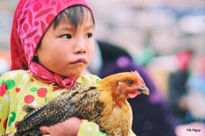 Cứu con gà