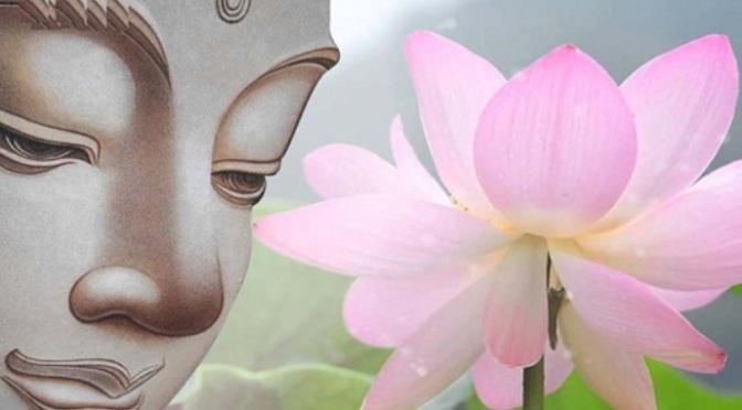 Sen, bùn và Phật