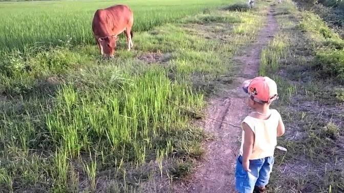Đi chăn bò trừ nợ