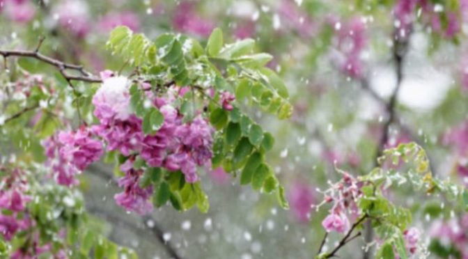 Nhịp nhịp mưa