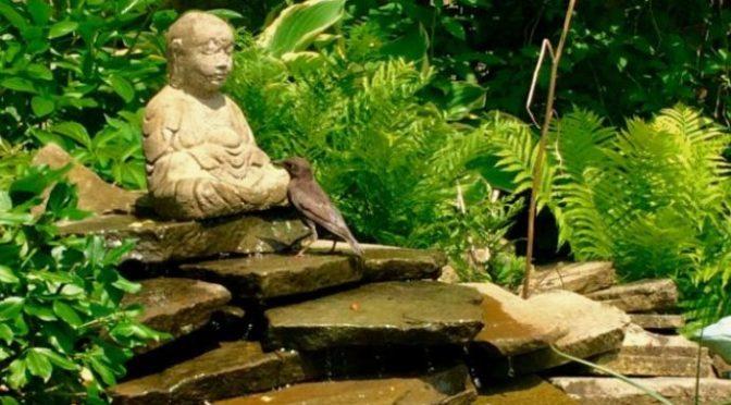 Trò chuyện với Phật 1