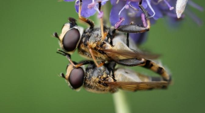Suy giảm côn trùng toàn cầu – Loạt điều tra của Mongabay giúp xác nhận