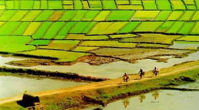 Phát triển Đồng Bằng Sông CửuLong