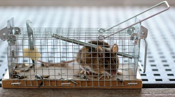 The mouse-trap battle
